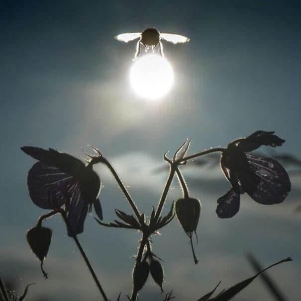 Πανίσχυρη Μέλισσα