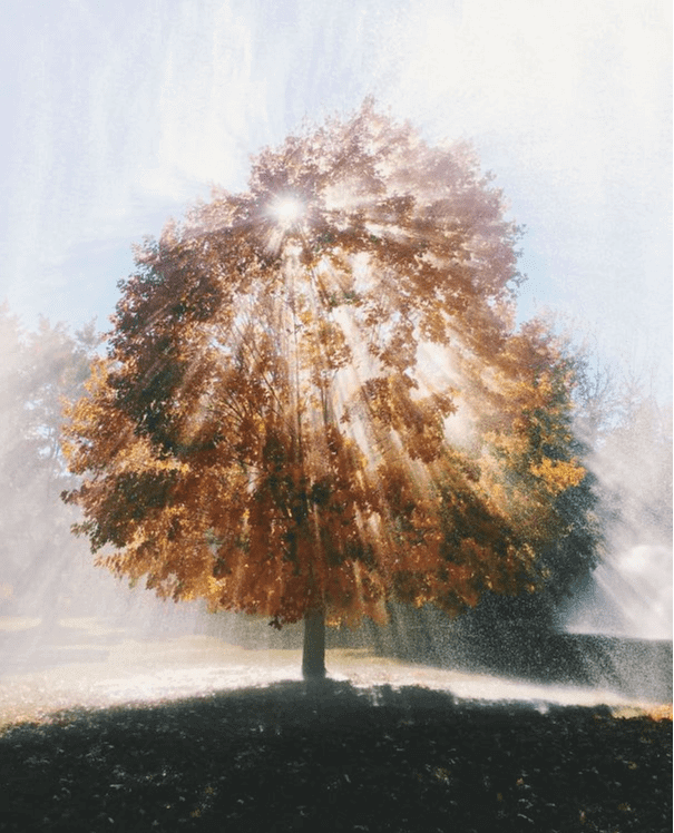 To Δέντρο Της Ζωής