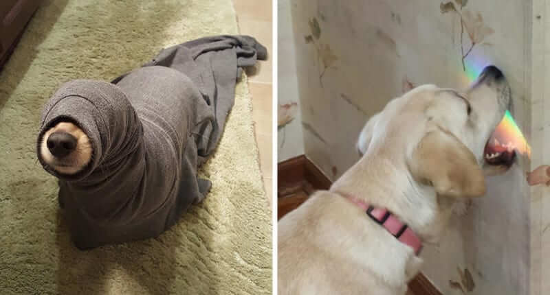 55 Hilarious Dogs That Will Make You Laugh Out Loud