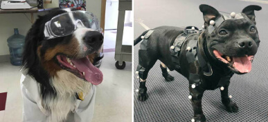 20+ Working Dogs With Real Jobs That'll Put Your Career To Shame
