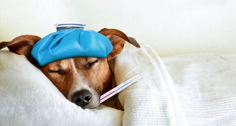 Top 10 Diet-Related Common Dog Health Problems
