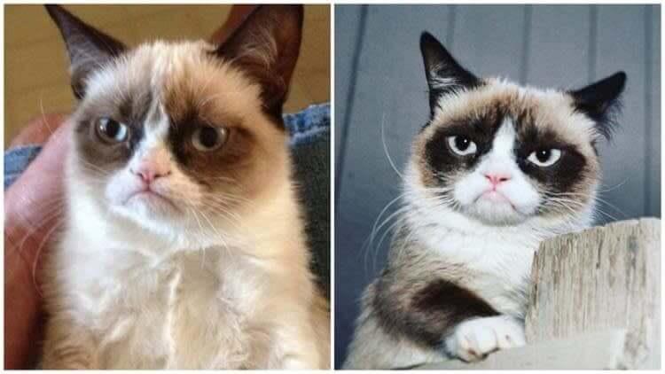 O gatinho mais famoso dos memes hoje já não está mais entre nós, infelizmente.